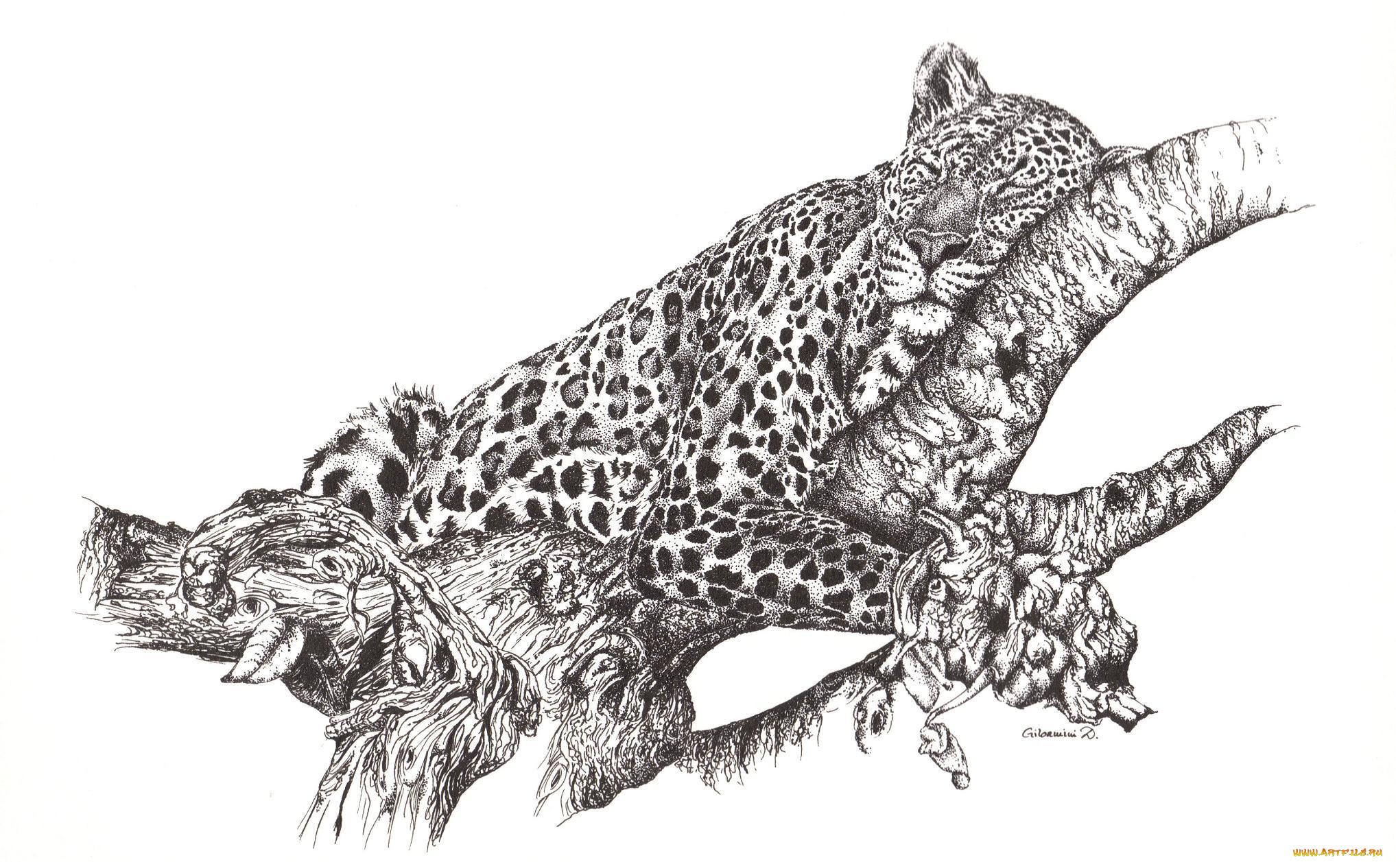 также, картинки животных хищников карандаш чаще всего